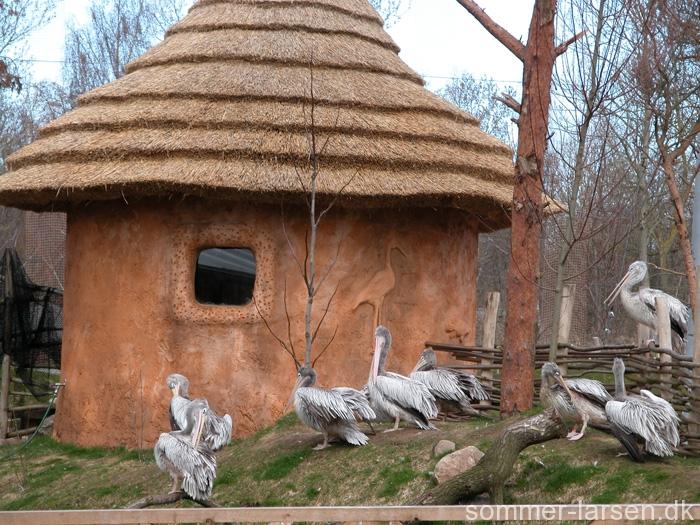 Design-Odense-Zoo-Themeing-Voliere-Sommer-Larsen